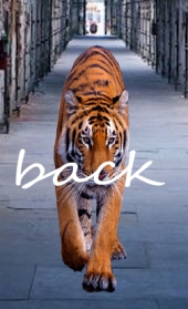 BACK TAGGED